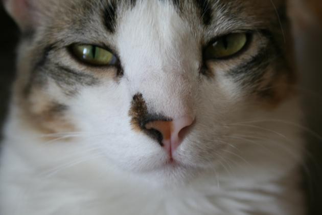 Luis mit kritischem Blick