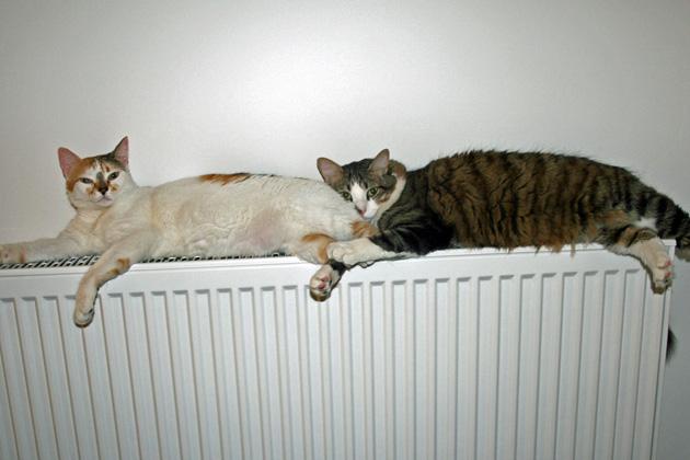 Tandem-Schlafen